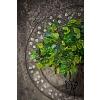 Drátovaný strom života - srdeční příval energie  25 x 35cm