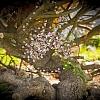 Drátovaný strom života - něžnost a láska 22 x 32 cm